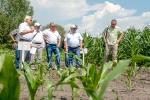 Презентація ділянок харчової кукурудзи