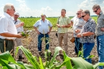 Маслійов С.В. презентує ділянки харчової кукурудзи