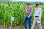 Ділянка посіву цукрової кукурудзи «Спокуса»
