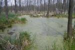 Ландшафти заболоченої місцевості у Полтавській області