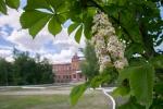 сквер біля університету