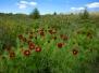 Казкове цвітіння у Самсонівській заводі